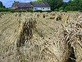 Corn stooks, Hilcott - geograph.org.uk - 1427524.jpg