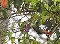 Costa Rica DSCN2639-new (31129935485).jpg