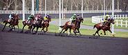 Course trot Vincennes