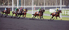 Course trot Vincennes.jpg