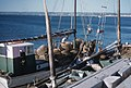Crayfish boat pulls into Geraldton 320 miles north of Perth WA. 1959 (38257992976).jpg