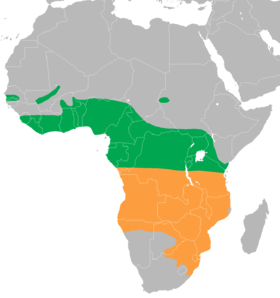 Crex egregia distribution map.png