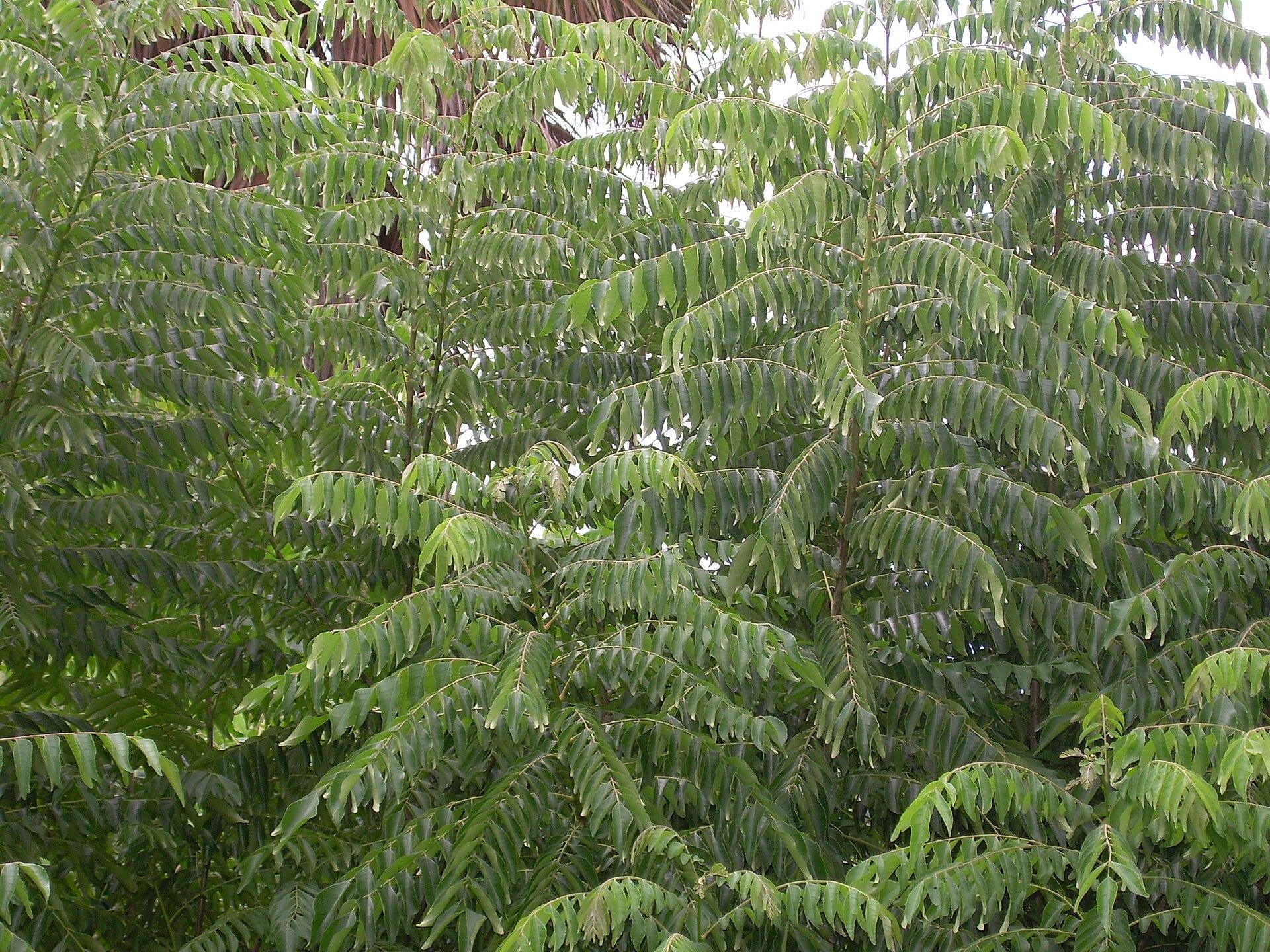 Curry Baum