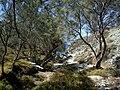Cyclades Folegandros Ambeli Plage - panoramio.jpg