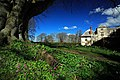 Cyclamen at Cranborne Manor - geograph.org.uk - 373177.jpg