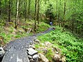 Cycle Trail in Kirroughtree Forest - geograph.org.uk - 431790.jpg