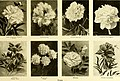 Cyclopedia of American horticulture, comprising suggestions for cultivation of horticultural plants, descriptions of the species of fruits, vegetables, flowers and ornamental plants sold in the United (14764473941).jpg