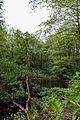 Dülmen, Naturschutzgebiet -Franzosenbach- -- 2014 -- 0044.jpg