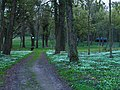 Dąbrowa Niemodlińska - park 002.jpg