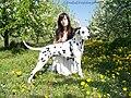Dalmatian Bamsej Magiczna Oaza.jpg