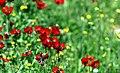 Dasht-e-Susan spring nature, Izeh, Khuzestan (13961229400088636571511439076081 57338).jpg