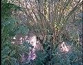 De Demervallei, teelt van wilgenhakhout in een afgesneden meandercoupure - 354890 - onroerenderfgoed.jpg