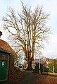 De Zeven-Sacramentenboom , opgaande linde - 374879 - onroerenderfgoed.jpg