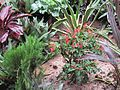 Decorative plant in apartment 01.jpg