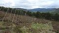 Deer Fence (An Sgòr Dubh) on Mar Lodge Estate (29JUL17) (2).jpg