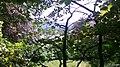 Denbigh Nature (original).jpg