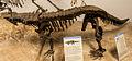 Desmatosuchus mount.jpg