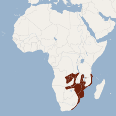 Distribution of Epomophorus crypturus.png