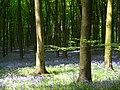 Dodsley Wood - geograph.org.uk - 808445.jpg