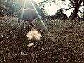 Dog and flower.jpg