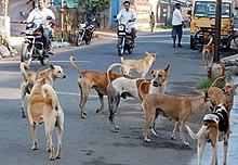 Street dog - Wikipedia