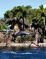 Dolphin Cove 31.jpg