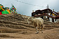 Drepung Monastery3.jpg