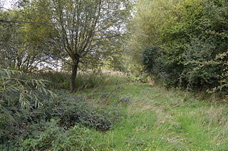 Dropshort Marsh nature reserve in the United Kingdom