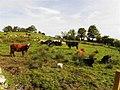 Drumcor Townland - geograph.org.uk - 2047559.jpg