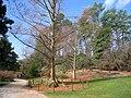 Duke Gardens - March 15, 2010 - IMG 4885.JPG
