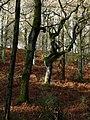 Durford Wood - geograph.org.uk - 1132132.jpg