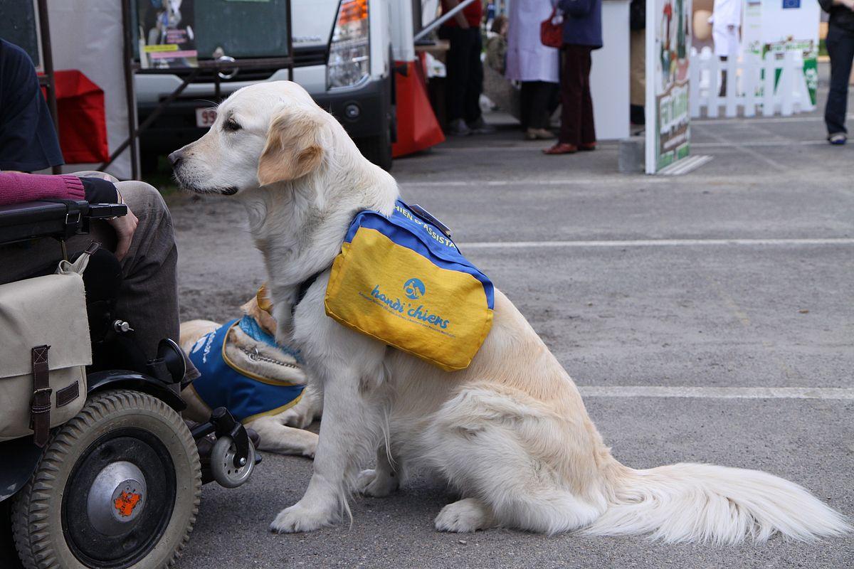 faire shampoing pour chien