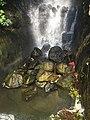 Eden Project waterfall- base.jpg