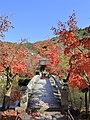 Eikan-do Zenrin-ji, November 2016 -04.jpg