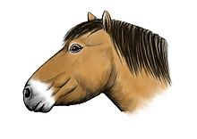 Reconstruction of the Yukon horse, based on a skull