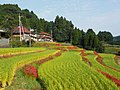 Eriyama rice terraces Saga Ogi with houses.JPG