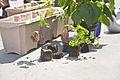 Erste Bepflanzung des heimgruen Blumenkasten.jpg