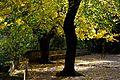 Espai natural de les Dous, Tardor, Torrelles de Foix. (22452395499).jpg