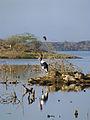 Ethiopie-Lac Basaka (14).jpg