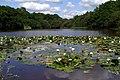 Eyeworth Pond, New Forest - geograph.org.uk - 1432676.jpg