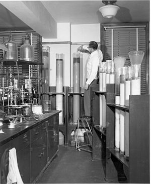 Column chromatography - A chemist in the 1950s using column chromatography. The Erlenmeyer receptacles are on the floor.