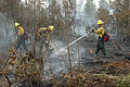 FEMA - 29924 - Forest Firefighters at Work.jpg