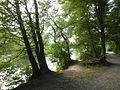 FFM Nidda Grillscher Altarm Uferweg NW 1.jpg