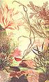 FMIB 53677 Algues rouges, Floridees ou Rhodophycees.jpeg