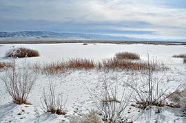 Fallon National Wildlife Refuge snow.jpg