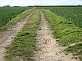 Farm track - geograph.org.uk - 745120.jpg