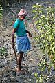 Farmer - Taki - North 24 Parganas 2015-01-13 4736.JPG