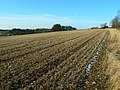 Farmland near the Wysis Way, near Sapperton - geograph.org.uk - 1109650.jpg