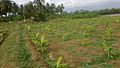Farmlands in Sirumugai.jpg
