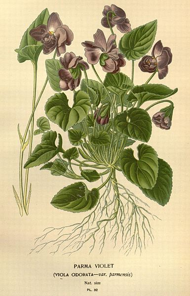 File:Favourite flowers of garden and greenhouse (Pl. 32) (7789059768).jpg